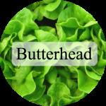 butterhead