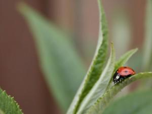 ladybug-1533227